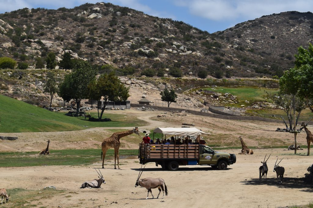 Caravan Safari at San Diego Zoo Safari Park