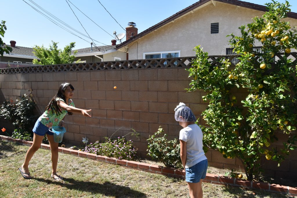 Cheeseball throw