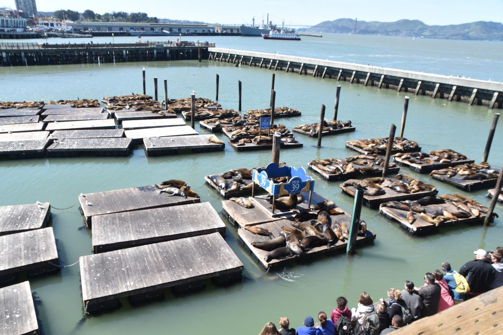 Sea Lions at Fisherman's Wharf San Francisco