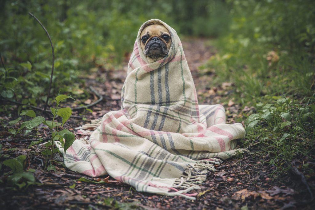 Road trip blanket