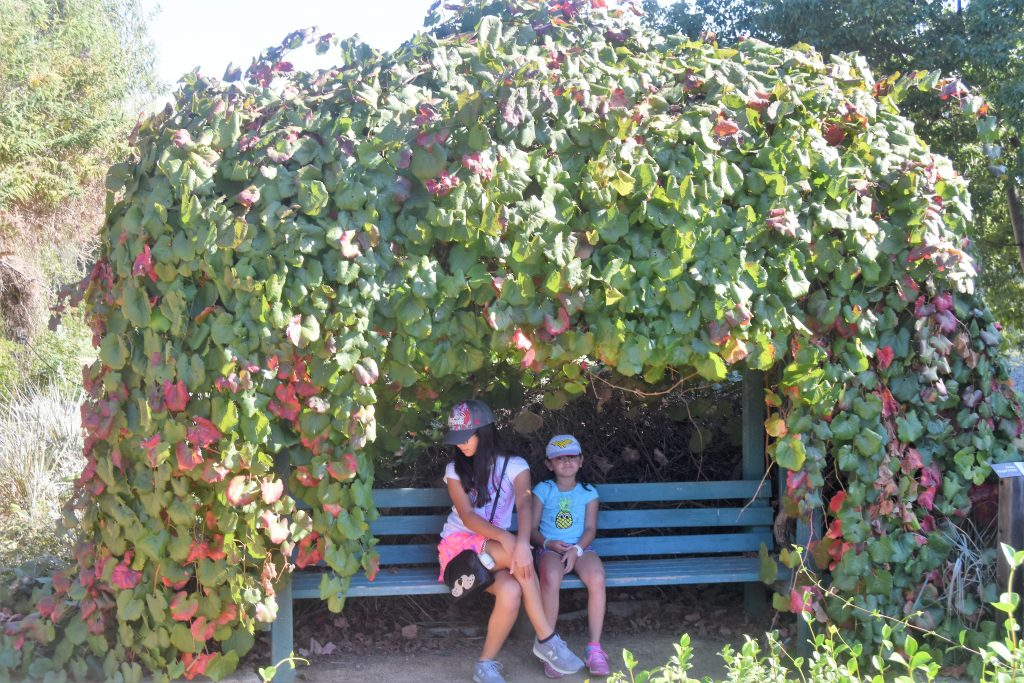 The Great Pumpkin Hunt: Picture opportunity at the garden