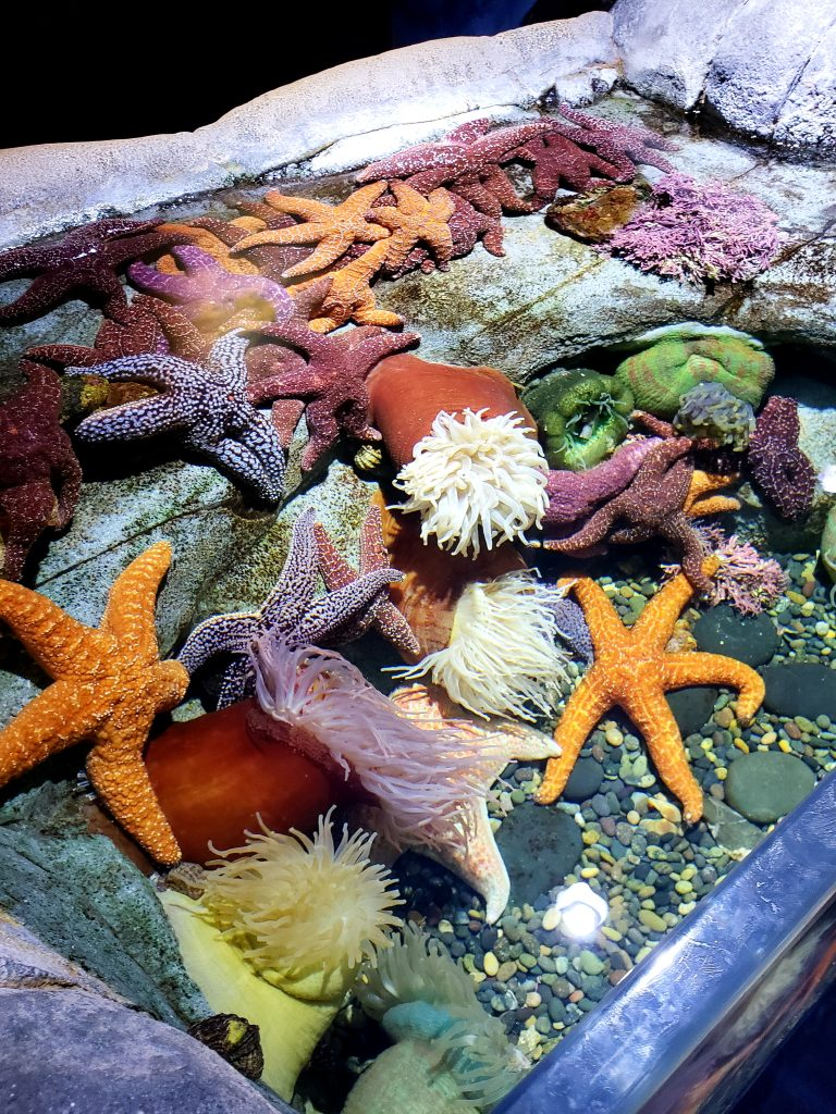 The Aquarium of the Pacific: 4 Reasons to Visit