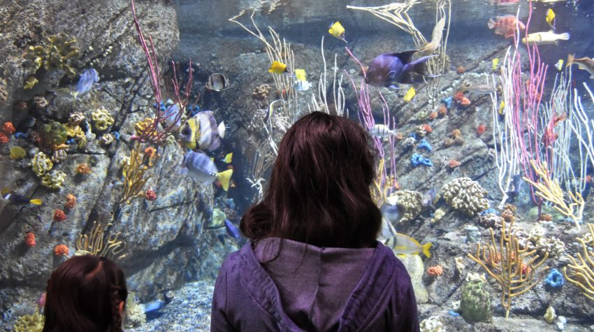 Aquarium of the Pacific: 4 Reasons to Visit