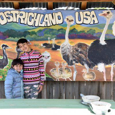 Ostrichland USA: A Fun Road Trip Detour