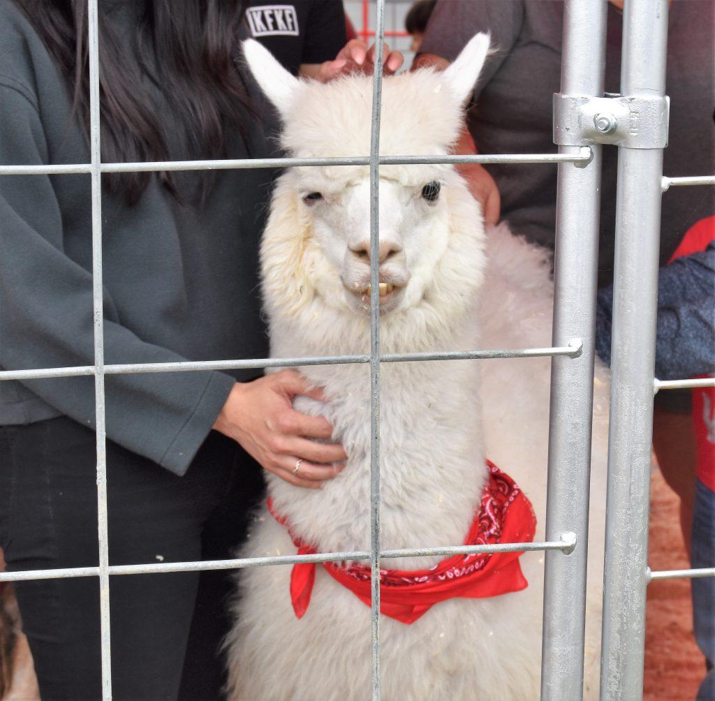 Llama at America's Family Pet Expo