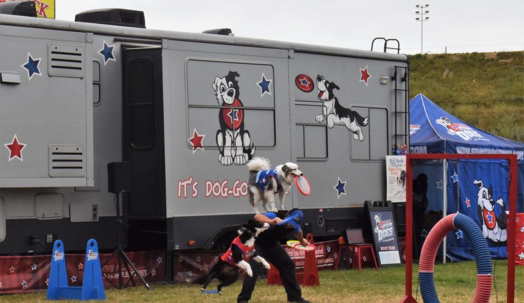 Dog stunts at America's Family Pet Expo