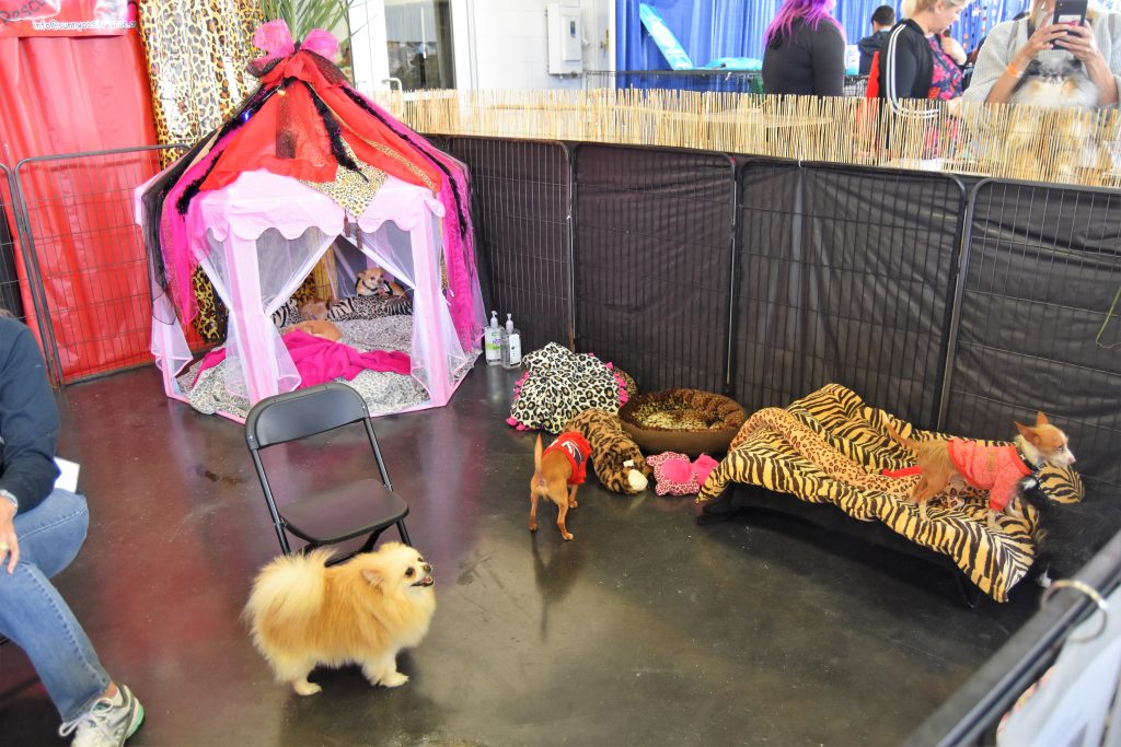 Dog adoption at America's Family Pet Expo