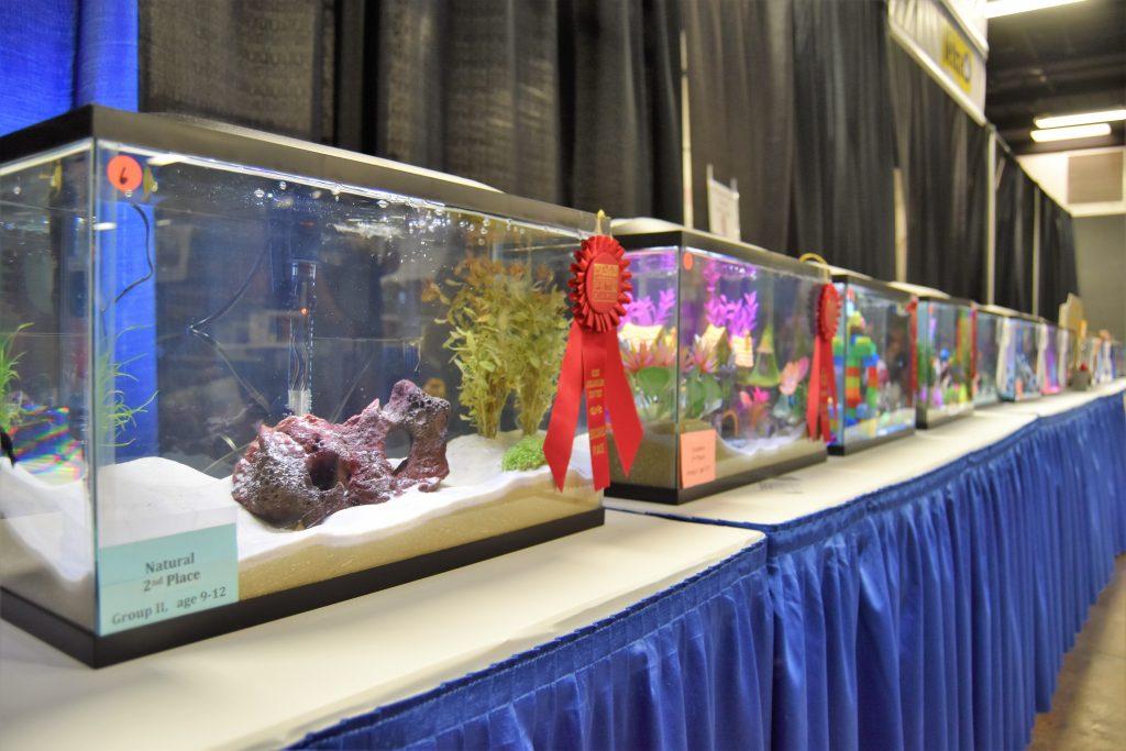 Kid's Aquarium Contest at America's Family Pet Expo