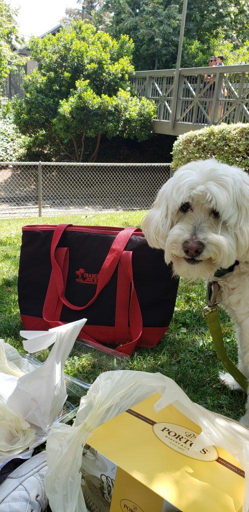 Dog enjoying picnic at Travel Town