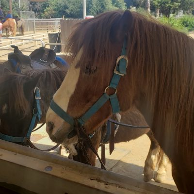 Griffith Park Pony Rides: 10 Parent Tips