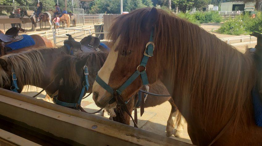 Griffith Park Ponies