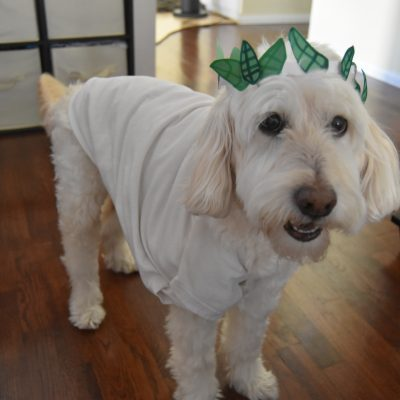 Dog Costume DIYs: So Easy A Kid Can Make Them!