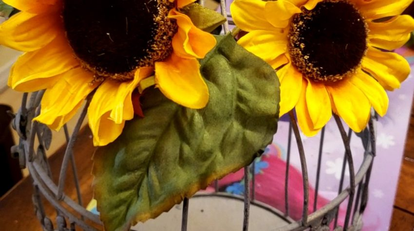 Sunflowers on top of birdcage