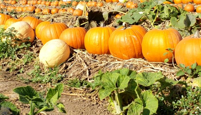 Best Fall Activities in Southern California